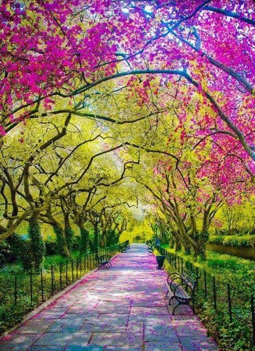 SAS stroll in Central Park